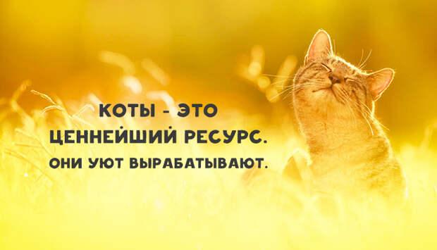 Без кота и жизнь не та: обязанности по дому каждого кота