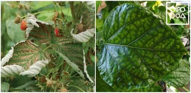 Признаки дефицита магния у растений