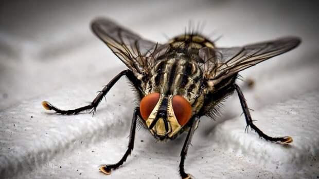 Зоологи раскрыли роль сигнальных белков в эволюции насекомых