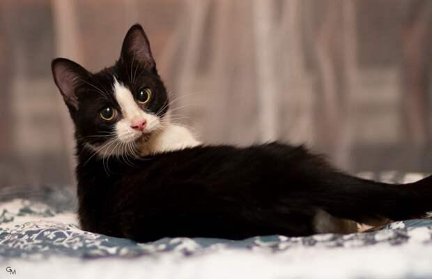 Озорная солнышка), забавная малышка, она очень ждёт свой дом!