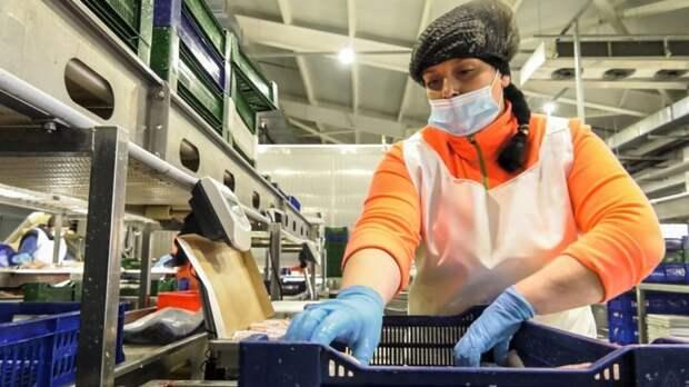 25 тонн в сутки — завод резидента ТОР «Южная» вышел на проектную мощность. Видео