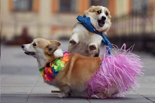 Очаровательные и смешные животные