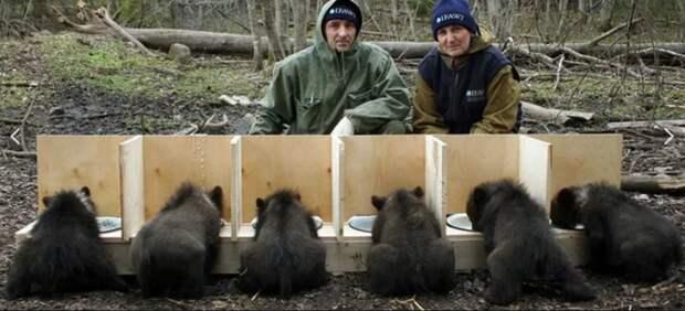 Пажетнов заменил маму-медведицу уже 160 медвежатам, осиротевшим, чаще всего, в результате охоты. Биолог, Пажетнов, приют для медвежат