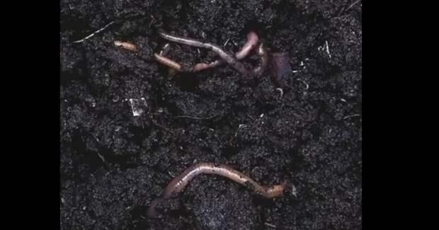 Дождь, хвоя и черви: реклама французских духов с ароматом леса Коми