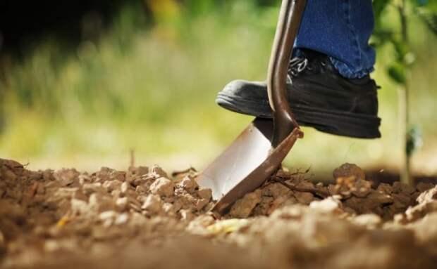 В Севастополе попросили не копать