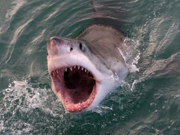 Мобильные технологии спасают от нападений акул отдыхающих, пловцов и серферов