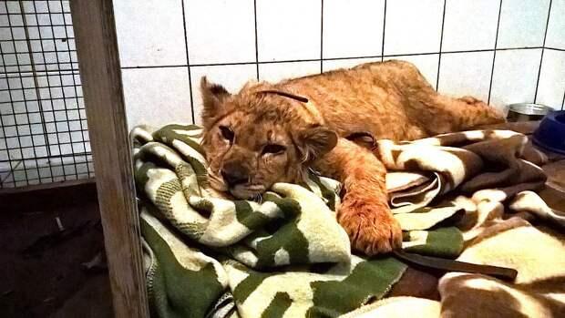 Про диких животных, которые всех удивили! Спасение ослика-сюрприза, молочного медвежонка и йога-львицы!