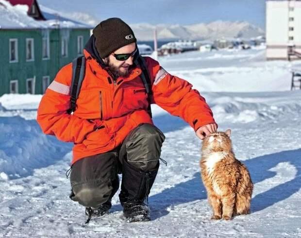 Кеша - единственный кот на норвежском архипелаге Шпицберген