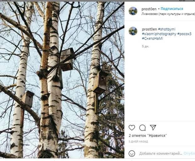 В Лианозовском парке становится все больше скворечников