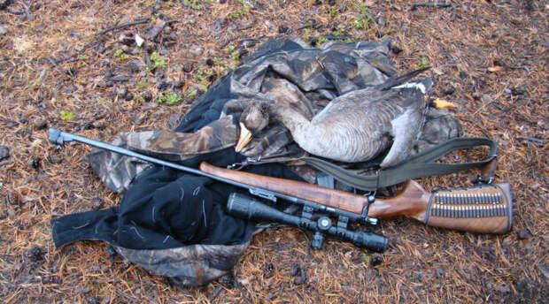 Различие убойной силы оружия: пневматика и огнестрел