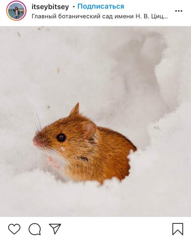 Фото дня: мышь-полевка поселилась в Ботаническом саду