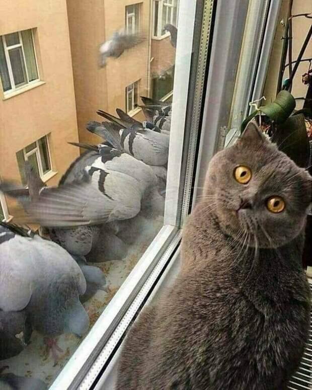 Смешная подборка фотографий котиков, которая заставит вас улыбаться!