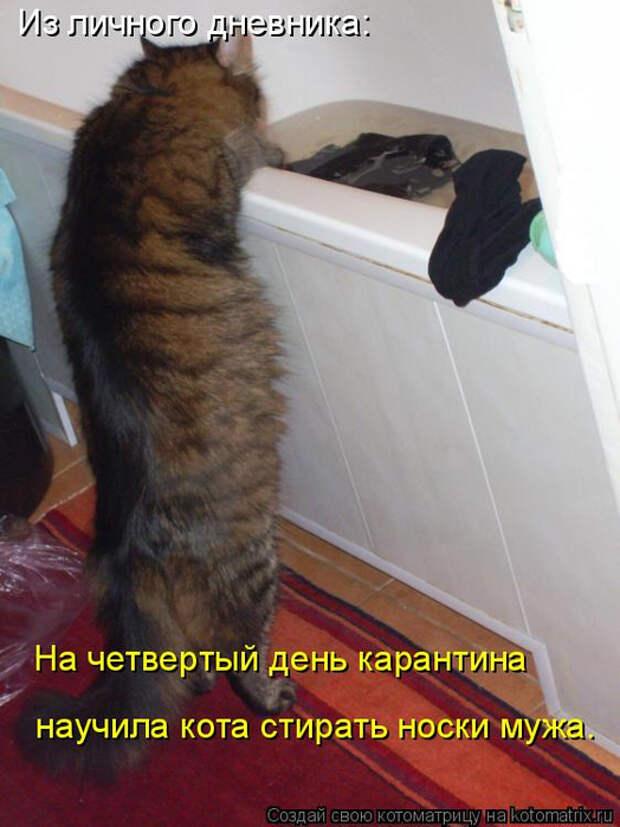 kotomatritsa_Vx (524x700, 318Kb)