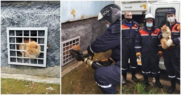 Спасатели освободили котика, застрявшего между железными прутьями решетки