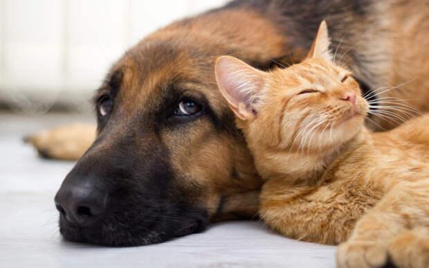 Кошки так же привязаны к людям как и собаки, показывают исследования