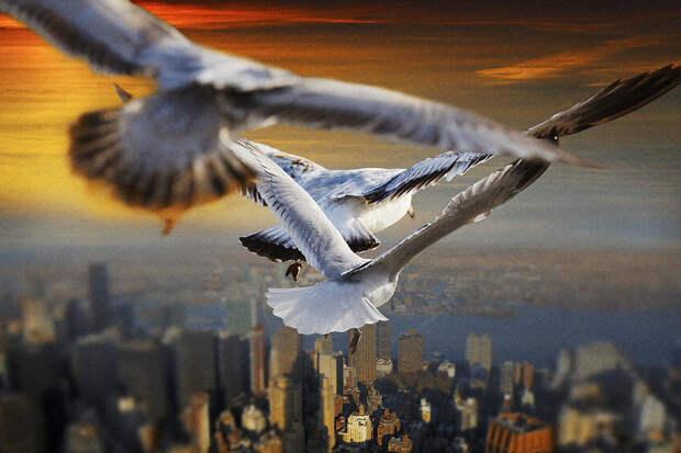 Паря над землей, словно птица