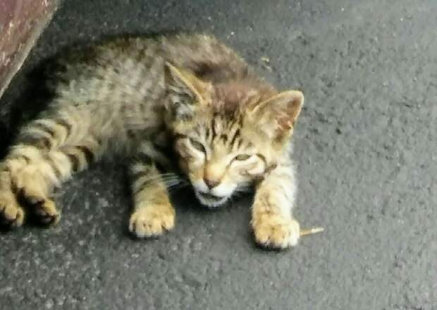 котёнок на дороге