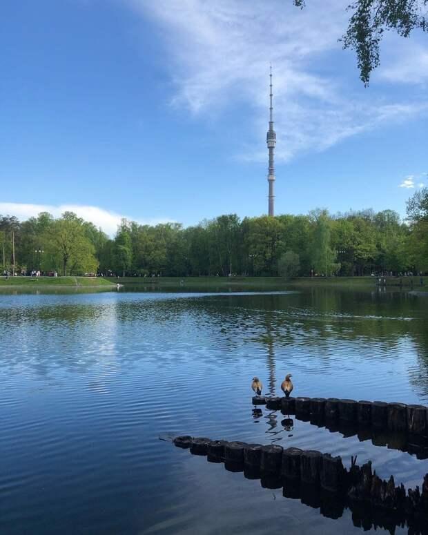 Фото дня: в Останкинском парке прошло утиное свидание