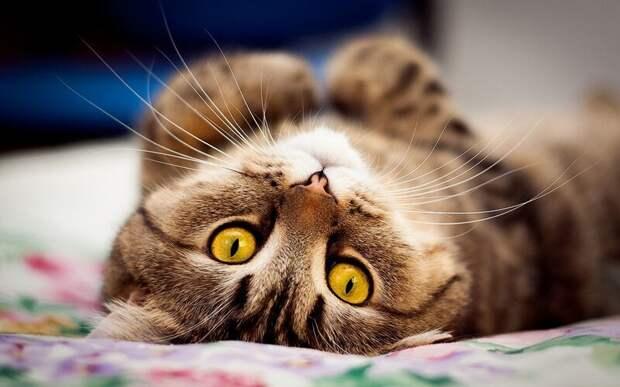 27. Кошка умеет слушать. жены, интересное, кошки, юмор