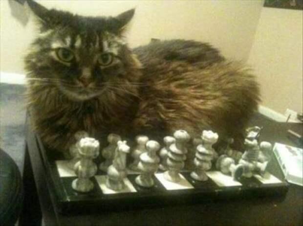 Кошки всегда будут лежать там, где хочется им. Даже если вам это не нравится