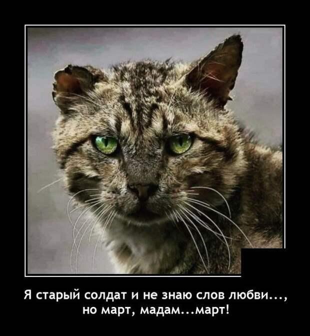 Демотиватор про кота в марте