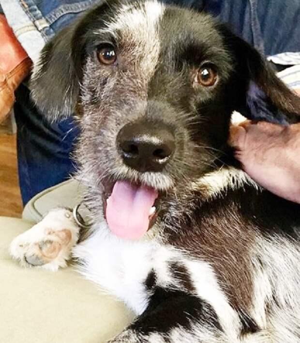 Собачка с необычным окрасом мордочки оказалась бездомной, но удача все же улыбнулась ей
