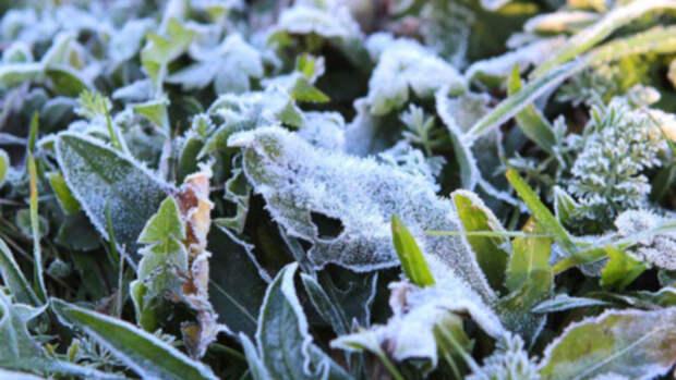 Жителей Алтайского края предупредили о заморозках до -3°C