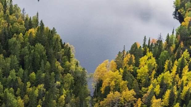 Рослесхоз расширил границы лесов Петербурга