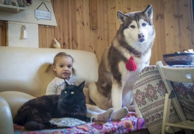 Самая диванные собака в мире