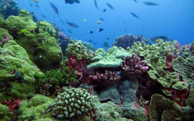 Заповедная территория островов Феникс интересное, мир, национальный парк