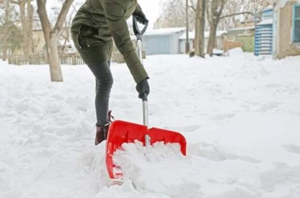 Подкормки по снегу – что, где и зачем сыпать