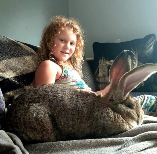 5 милых фото самого большого кролика в мире