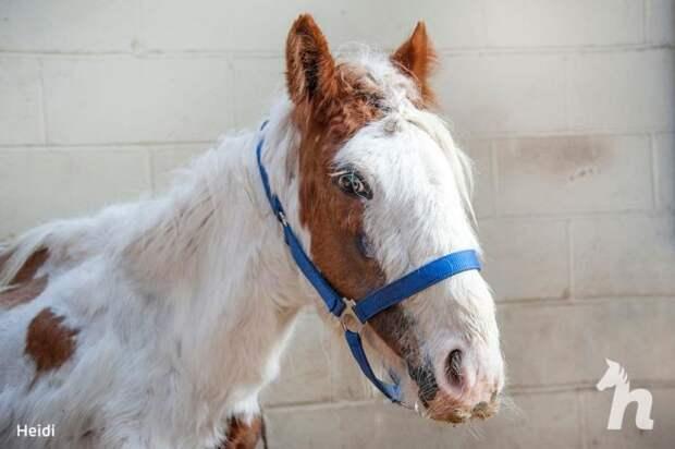 Волонтеры спасли лошадь Хайди, в которую уже никто не верил. Лошадь выросла и удивила всех своей красотой