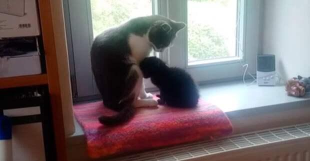 Подбирая на улице бездомного котёнка, люди переживали, какова будет реакция их старого кота...