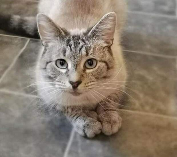 Котик очень любил гулять, но однажды он вернулся домой с запиской - с тех пор хозяева больше не выпускают питомца