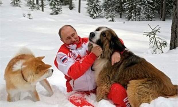 Путин решил провести учёт домашних животных