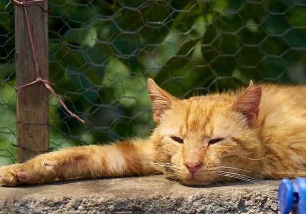 Зоопсихолог рассказала об особенностях кошачьей психики и приемах, благодаря которым ваша кошка перестанет грустить