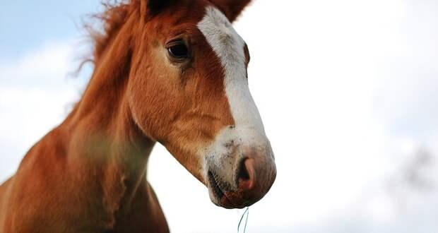 Почему мы измеряем мощность влошадиных силах: кони илюди