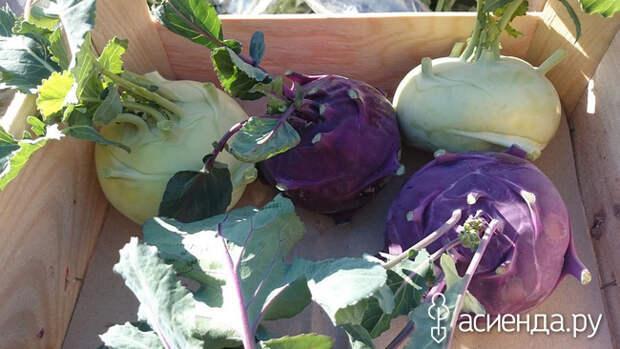 Кольраби: чем полезна и как выращивать сочную «кочерыжку»