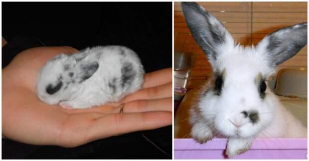 Какое животное самое милое? Грациозное и красивое? Правильный ответ: крольчиха Яха (но не её муж)! :)