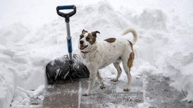 Где собака зарыта: в Ростовской области сложилась патовая ситуация на рынке труда