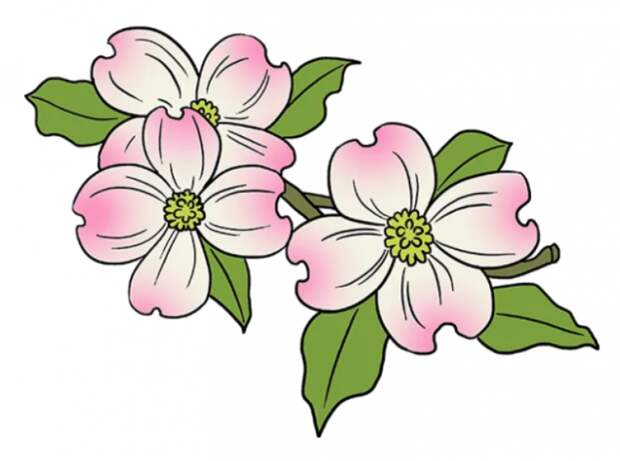 Как нарисовать цветы своими руками — 5 мастер-классов