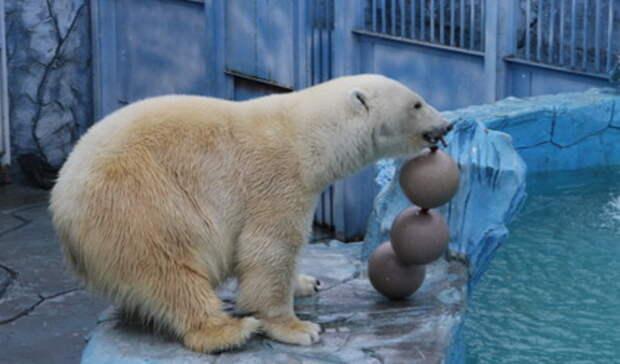 Названы причины смерти белого медведя взоопарке Екатеринбурга