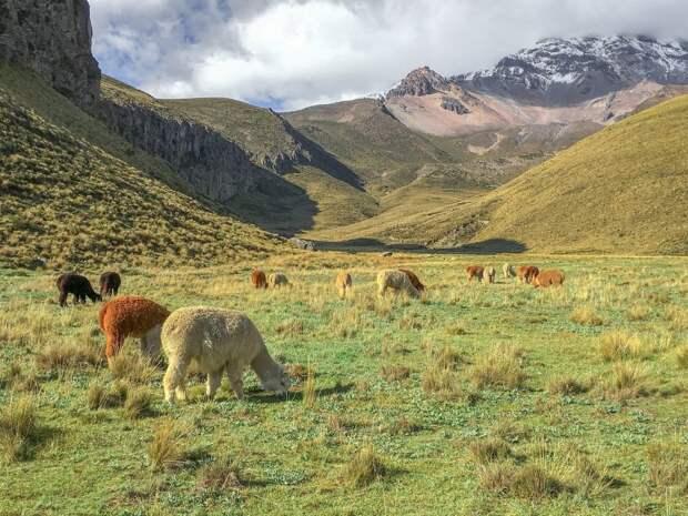 Ученые Тимирязевки проведут опыты на экваторе