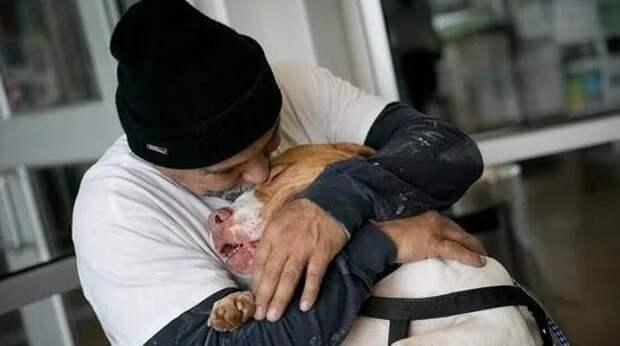 Хозяин отдал в приют пса, который покусал соседа