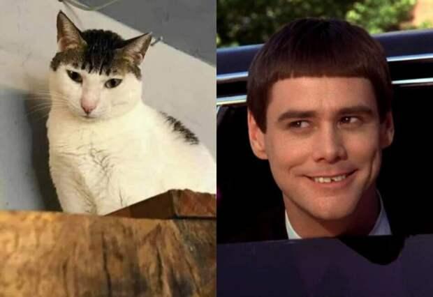 Пользователей Сети довёл до истерики кот, окрас которого наградил его нелепой челкой