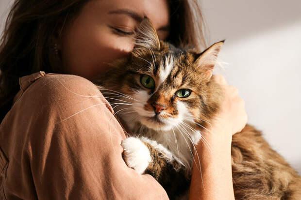 Лучший антидепрессант вмире: 7 самых ласковых пород кошек