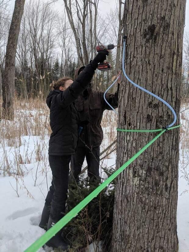 Для установки своих приспособлений он просверливает в дереве отверстие 8 мм, глубина которого должна быть 5 см кленовый сок, своими руками, сделай сам, сироп, сок