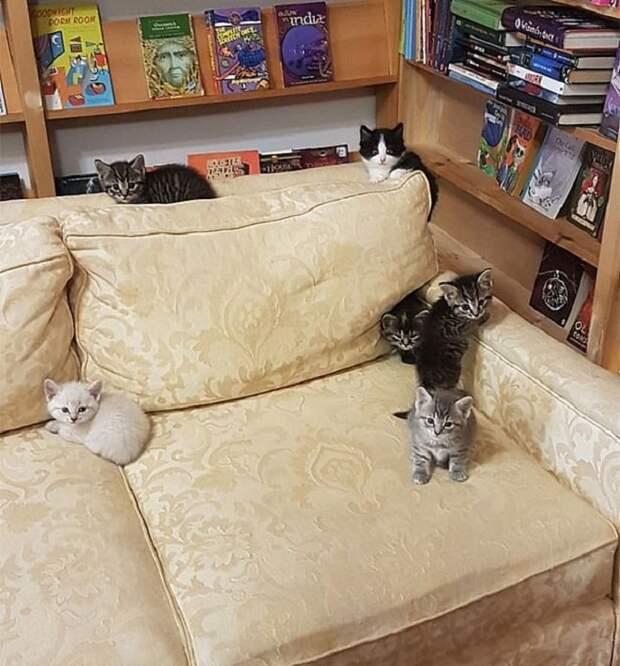 Котята на диване