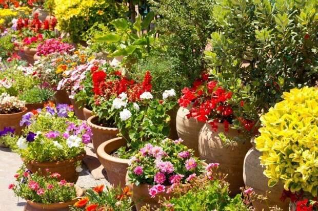 кашпо, клумба, цветы, сад